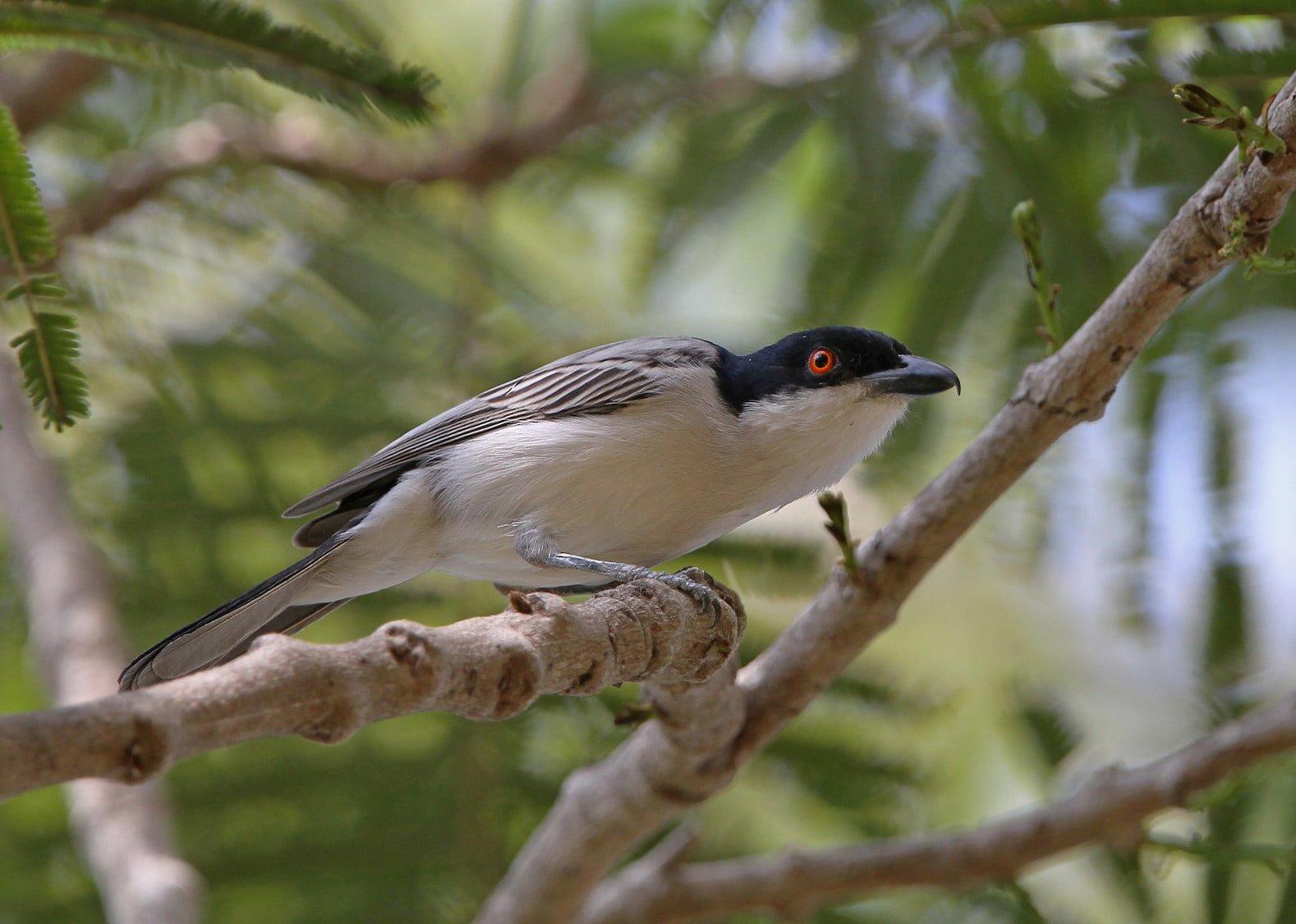Birding Uganda World Bird Traveler